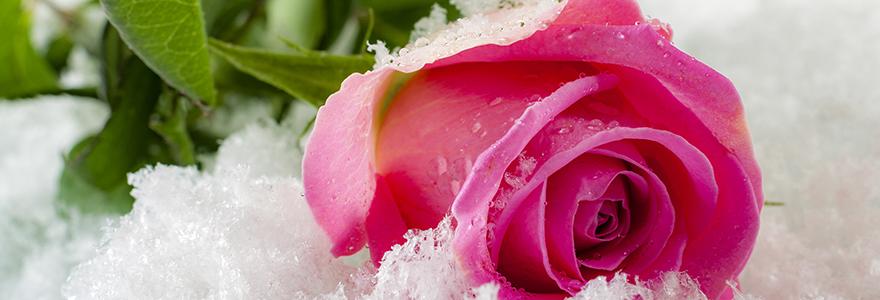 cadeau noel rose eternelle