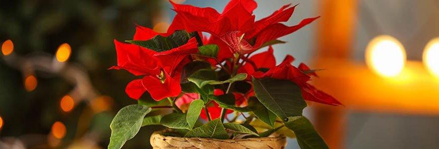 fleurs à offrir pour Noël
