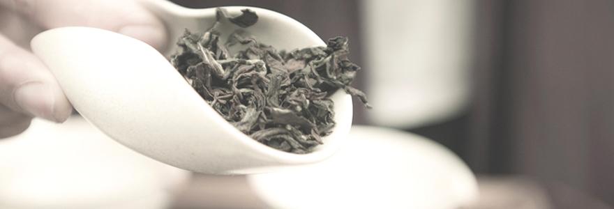 expert du thé
